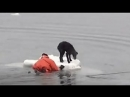 Холодное охотское море Моряк вплавь отправляется спасать собаку на отколовшейся льдине