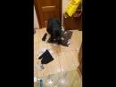 Собачий бедлам