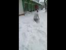 Милости да пряности со снегом)