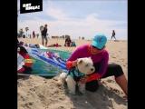 Собаки серфят в Сан-Диего. Орел и Решка