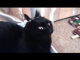 Когда ты кошка йог и любишь лежать на конструкторе Лего,но что то пошло не так)))