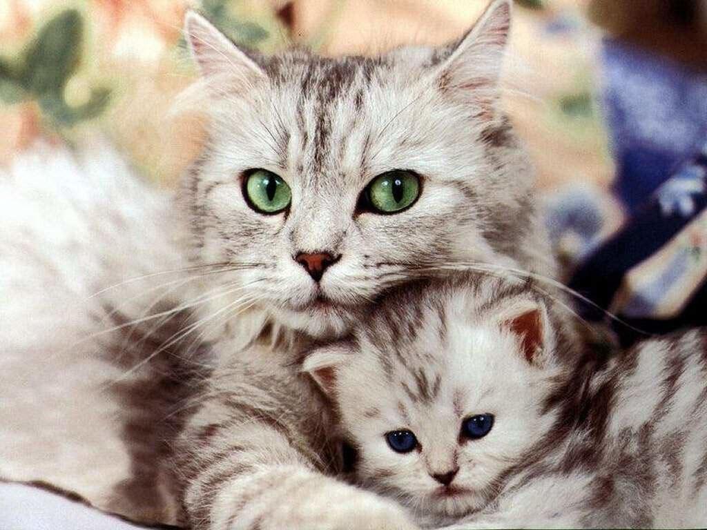 Как подготовиться к появлению кошки в доме