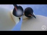 Пингвины делают селфи