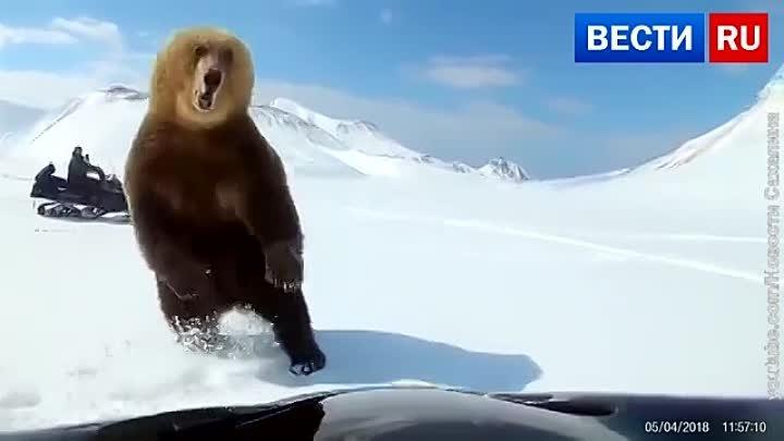 Курильские экстремалы на снегоходах устроили гонки за медведем
