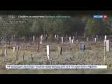 Новости на «Россия 24» • Сезон • В Перми лыжники и биатлонисты тренируются на кладбище