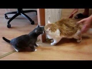 Обозреваем игрушку для котов с AliExpress