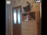 Неуклюжие котики