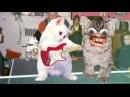 Sweary Kittens sing McLusky Lightsabre Cocksucking Blues