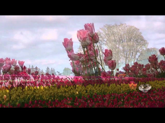 Gulistan ü Kulilken Nergiz yen Rengin 11 HD