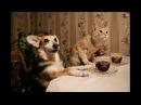 Самые прикольные видео про животных