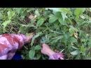 Полянка рыжиков