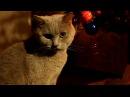 Жизнь британца Стивина/ The cat Steven the_grey