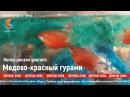 Медово-красный гурами, Gourami-Honey Red, Gourami miel-rouge, аквариумистика для всех