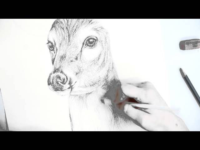 How to Make a Pencil Drawing of a Deer