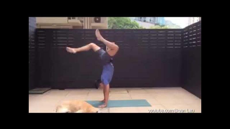 Pets Interrupting Yoga The Huffington Post