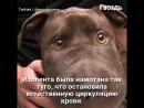 2 Дня несчастная собака с заклеенной мордой мучилась на улице. Как вдруг!..
