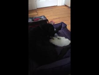 кот и Пит