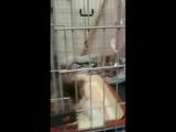 Мальвина, Тефтелька и котята на передержке