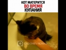 моют кота