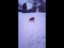 Виталик очень любит играть в снегу. Лучший друг Виталика это ХВОСТ!