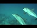 Подводный мир Красного моря (Египет) - невероятная красота