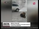 В России могут разрешить отстрел диких животных