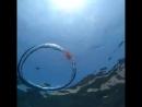 ...карусель медузы..)
