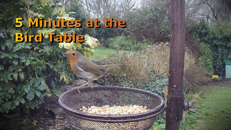 Bird Watching Five minutes at the bird table Can you name the variety's with your kids