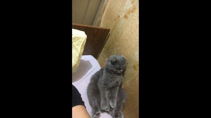 Кот сидит 🌚🌚🌚🌚❤️