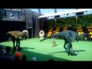 Шоу живых динозавров
