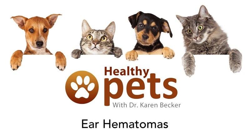 Ушные гематомы Ear Hematomas
