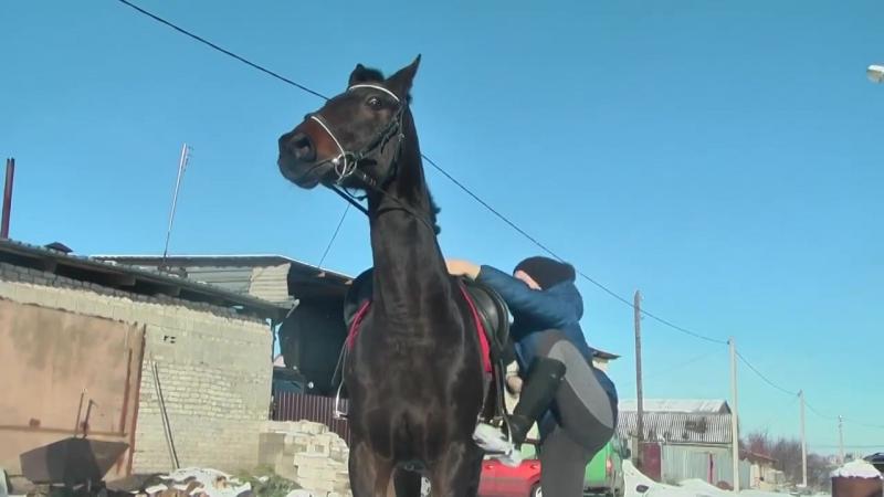 Лошадки семьи Ненашевых