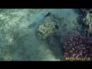 Дайвинг в Красном море (часть 1)