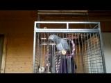Этого попугая зовут Гугуша, и он без проблем споет вам песню