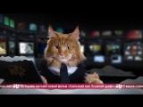 News Mews #9. Сугробам песец