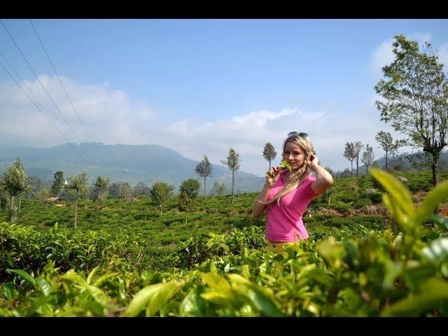 Приехали в Нувара Эллию чайные плантации Остановились в отеле Tea bush hotel Ramboda