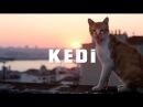 KEDI (2016 г.) - он же девять жизней - Кошки в Стамбуле - ТРЕЙЛЕР