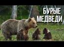Бурые медведи / Интересные факты о животных