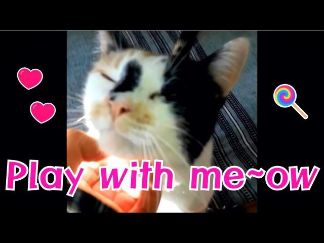 Cat Cafe I Play with meow I Kitten I 고양이 I Pet I Healing I Animal Therapy