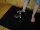 Hungry Kitten Wants Food