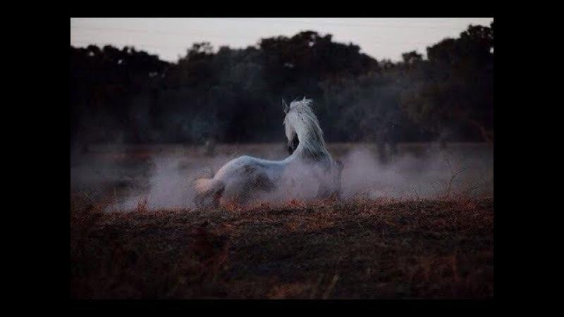 ~ Конный спорт ~ Твоя любовь это так красиво ~ Equestrian sport ~