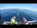 Flathead fishing in the South East Trawl Fishery Danish Seining