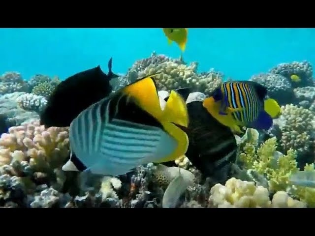 Успокаивающая музыка - подводный мир под успокаивающий музыку