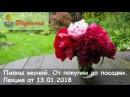 Пионы весной. От покупки до посадки – лекция С.Мовчан, СЦ Подворье 13.01.2018