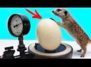 Что если Сунуть Яйцо Страуса в Вакуум..! Тимка первый раз увидел ЭТО..