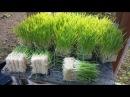 Our little fodder system