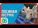ЛОСИНАЯ ФЕРМА Государственный природный заказник Сумароковский