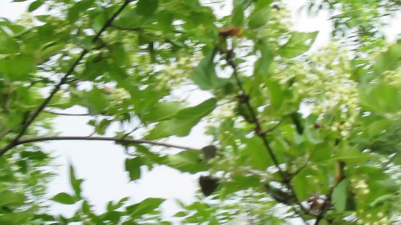 Дерево с бабочками, райский островок)