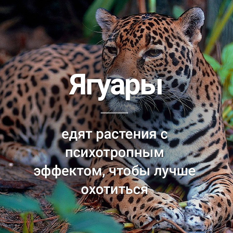https://pp.userapi.com/c840328/v840328022/487f8/NmlMEzvQ-bo.jpg