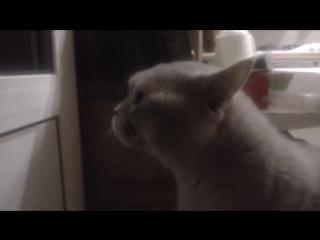 Говорящий кот просит открыть дверь)